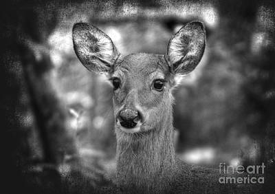 Photograph - Doe Portrait Black And White by Kathy Baccari