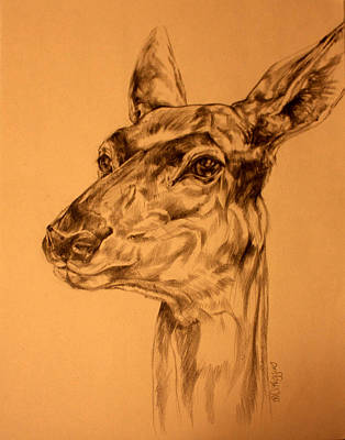 Doe Sketch Original by Derrick Higgins