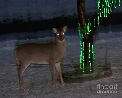 Perfect Christmas Card Photograph - Doe Visits My Tree Lights by Judy Via-Wolff