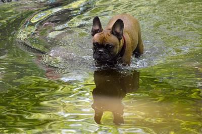 Adorable French Bulldog Puppy Photograph - Dog 172 by Joyce StJames