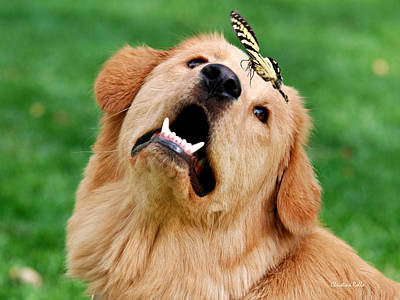 Golden Puppy Photograph - Dog And Butterfly by Christina Rollo