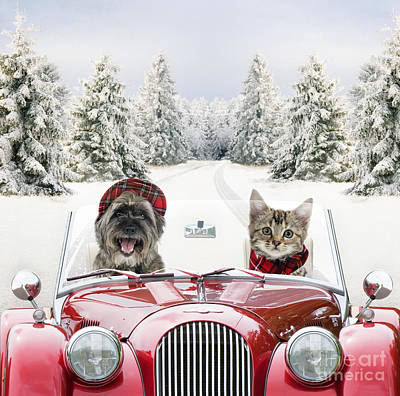 Photograph - Dog And Cat Driving Car Through Snow by John Daniels and Johan De Meester