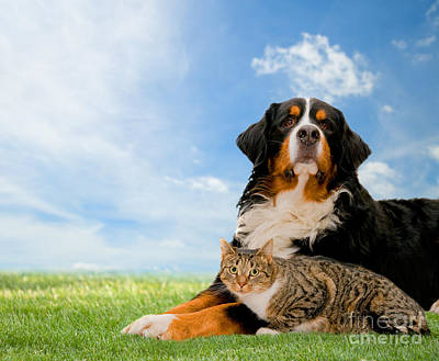 Puppy Photograph - Dog And Cat Together by Michal Bednarek