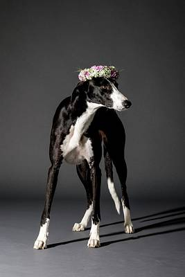 Dog And Flower Wreath Art Print by Photostock-israel