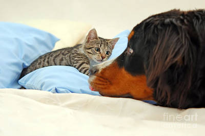 Fuzzy Photograph - Dog And Kitten by Michal Bednarek