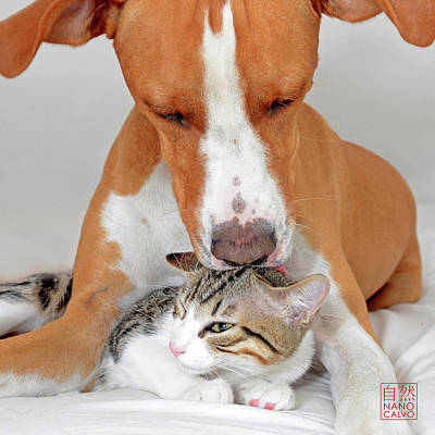 Pet Care Photograph - Dog And Kitten by Nano Calvo