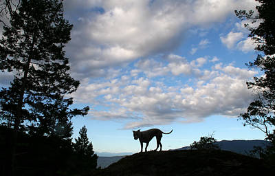 Photograph - Dog And Sky by Peggy Collins