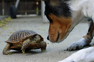 Dog And Turtle Art Print