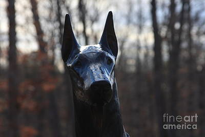 Photograph - Dog by Andrew Romer