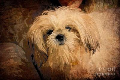 Photograph - Dog Art  by Aimelle