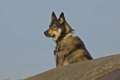 Photograph - Dog At Point Bonita 2 by SC Heffner