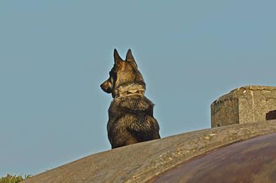 Photograph - Dog At Point Bonita by SC Heffner