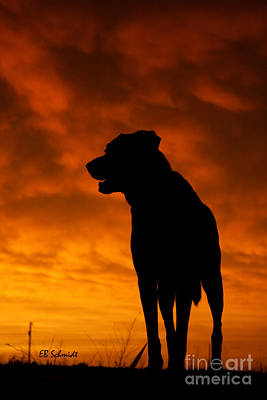 Photograph - Dog At Sunset by E B Schmidt