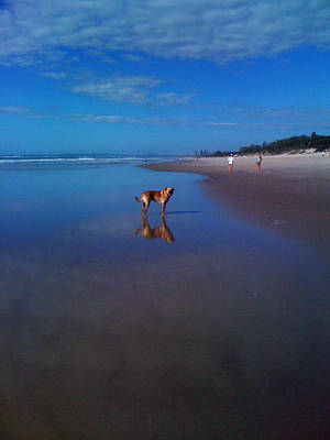 Photograph - Dog Beach Dreaming by Ankya Klay