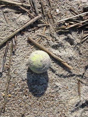 Photograph - Dog Beach Toy by Ellen Meakin