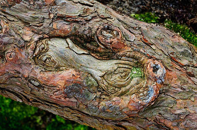 Art Print featuring the photograph Dog Bone In The Bark by Gary Slawsky