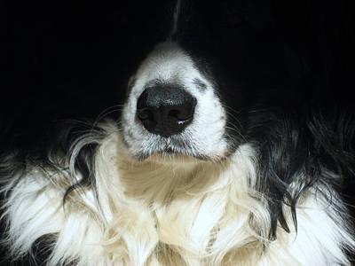 Photograph - Dog Close Up by Steve Ball