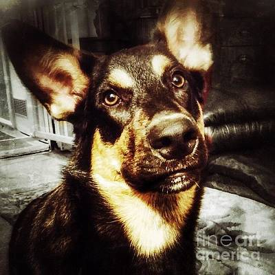 Animals Wall Art - Photograph - #dog #darcy #dogoftheday by Abbie Shores