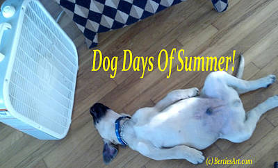Photograph - Dog Days Of Summer by Bertie Edwards