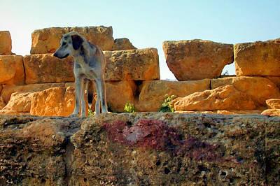 Photograph - Dog Days Of Summer by Caroline Stella