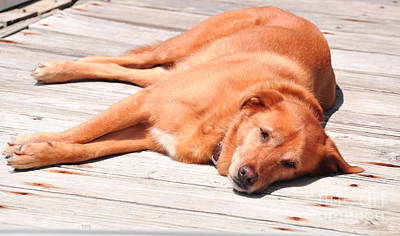 Dog Photograph - Dog Days On The Dock by Lee Wilson