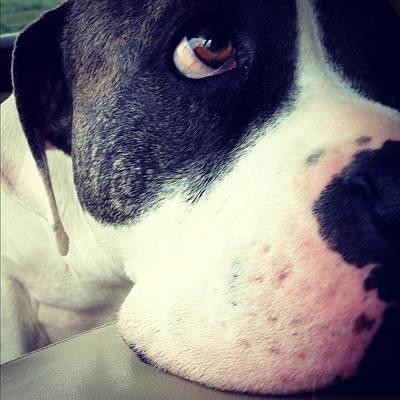 Photograph - Dog Faced by Dina Calvarese