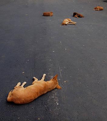 Photograph - Dog Gone by Robert Watson