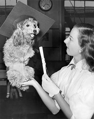 Photograph - Dog Graduates From School by Underwood Archives