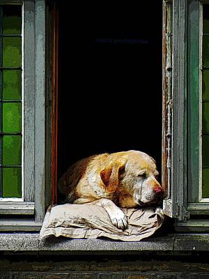 Dog In A Window Art Print