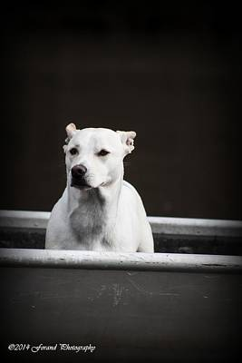 Winter Animals Rights Managed Images - Dog In Boat Royalty-Free Image by Debra Forand