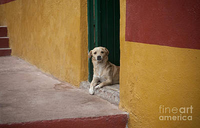 Photograph - Dog In Colorful Mexican City by John Shaw