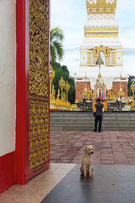 Photograph - Dog In Doorway To Phra That Phanom by Tim Bewer