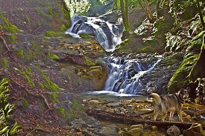 Photograph - Dog In Mossy Stream by SC Heffner