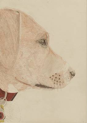 Dog In Profile Art Print by David Smith