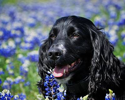 Photograph - Dog In The Wildflowers by Kristina Deane