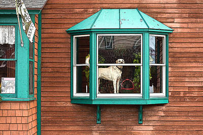 Dog In Window Art Print