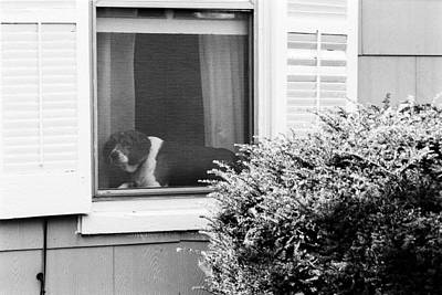 Photograph - Dog In Window by Harold E McCray