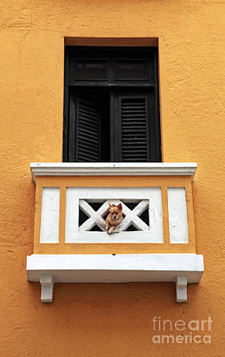 Perros Photograph - Dog by John Rizzuto