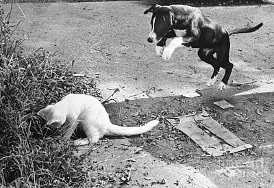 Attack Dog Photograph - Dog Jumping On An Unsuspecting Kitten by Lynn Lennon