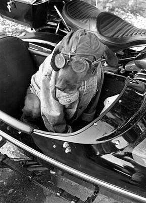 Sidecar Photograph - Dog Likes To Ride by Retro Images Archive