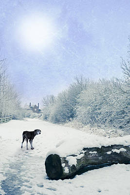 Dog Looking Back Art Print by Amanda Elwell