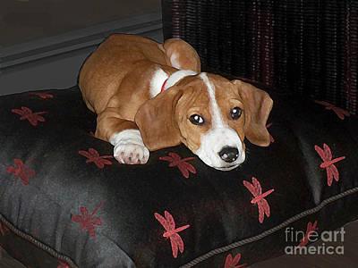 Cute Dog Digital Art - Dog - Mr. Oliver Relaxing by Maureen Tillman