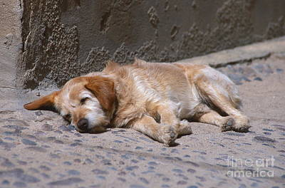 License Plate Skylines And Skyscrapers Rights Managed Images - Dog Napping Royalty-Free Image by Chris Selby