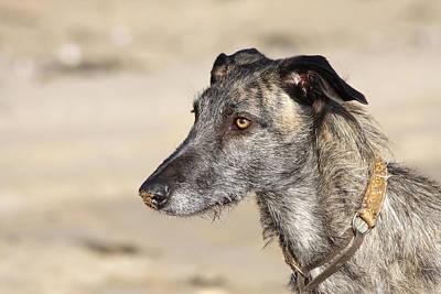 Photograph - Dog On A Beach by Steve Ball