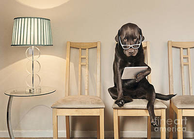 Humanlike Photograph - Dog On Ipad by Justin Paget