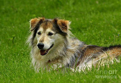 Dog On It I'm Tired Art Print by Inspired Nature Photography Fine Art Photography