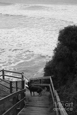Photograph - Dog On Sea Stairs by Amanda Holmes Tzafrir