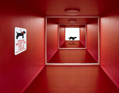 Corridor Photograph - Dog On The Loose by Jacqueline Hammer