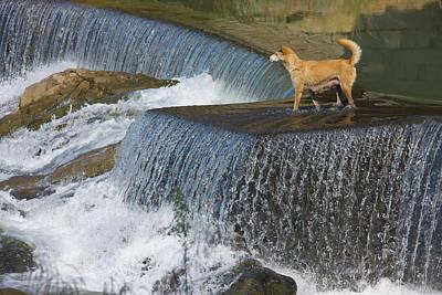 Dog On The Waterfall, Pingnan, Fujian Art Print by Keren Su