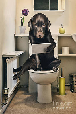 Dog On Toilet With Ipad Art Print by Justin Paget